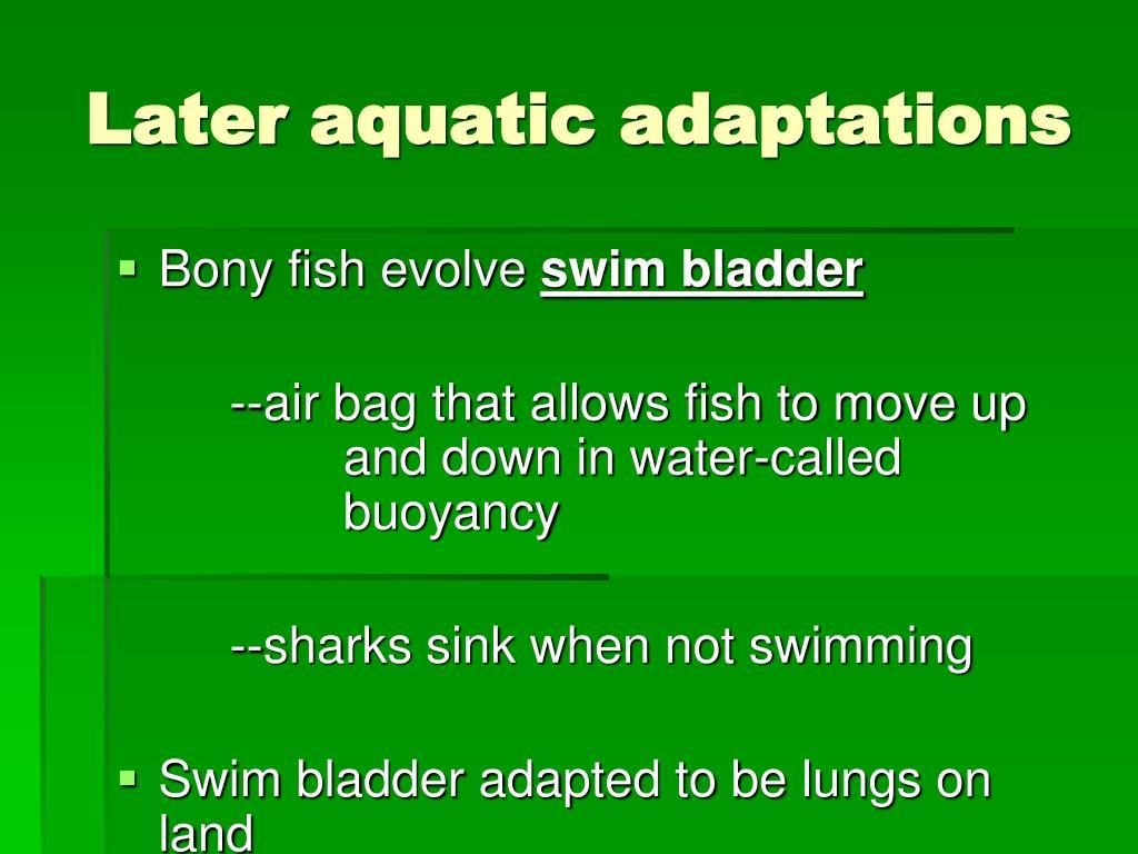 Later aquatic adaptations
