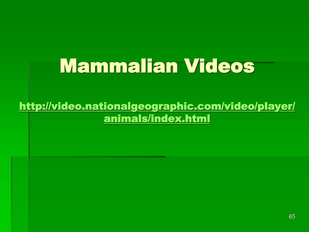 Mammalian Videos