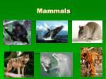 mammals54