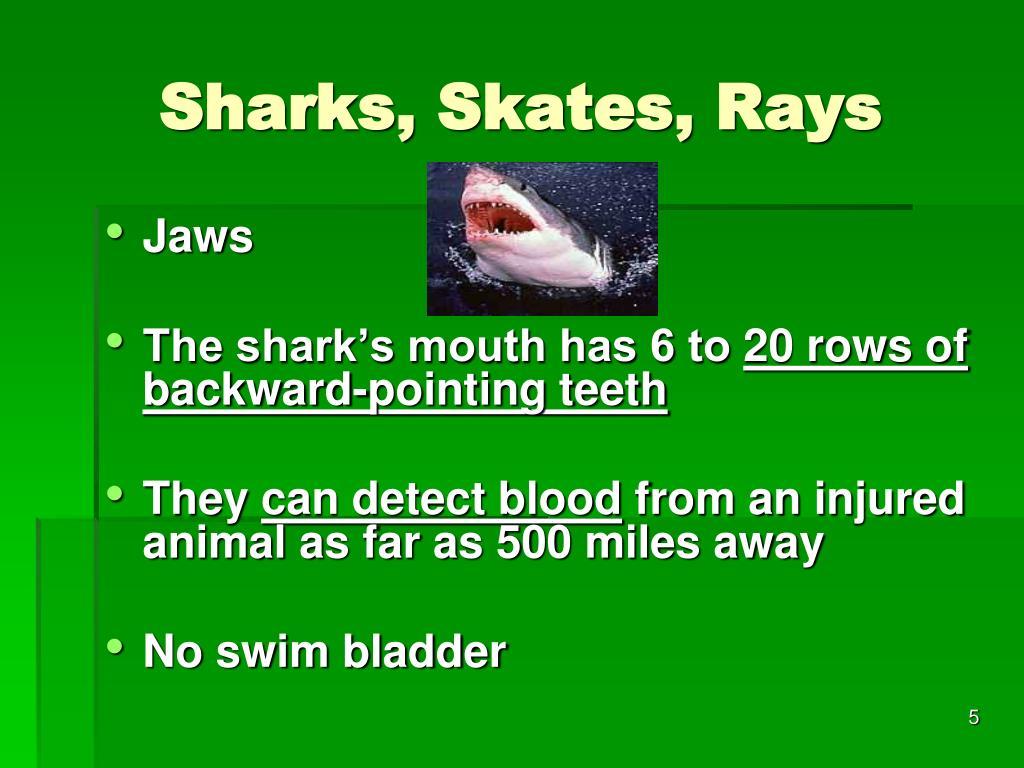 Sharks, Skates, Rays