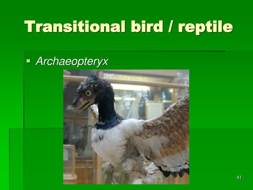 Transitional bird / reptile