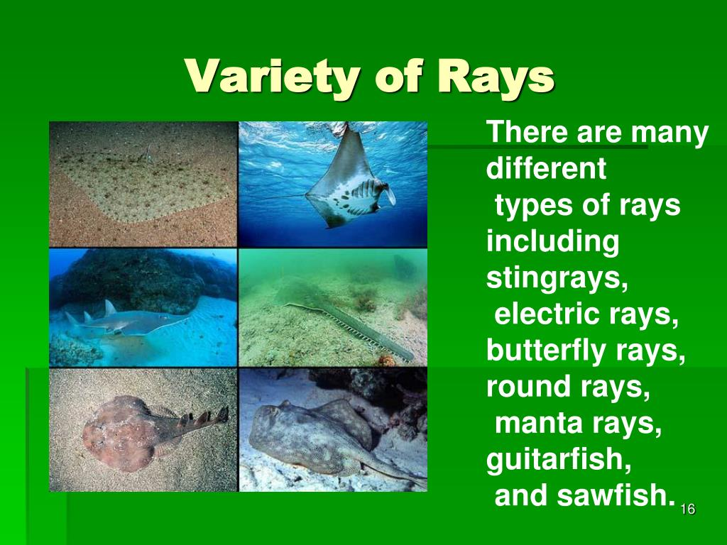 Variety of Rays