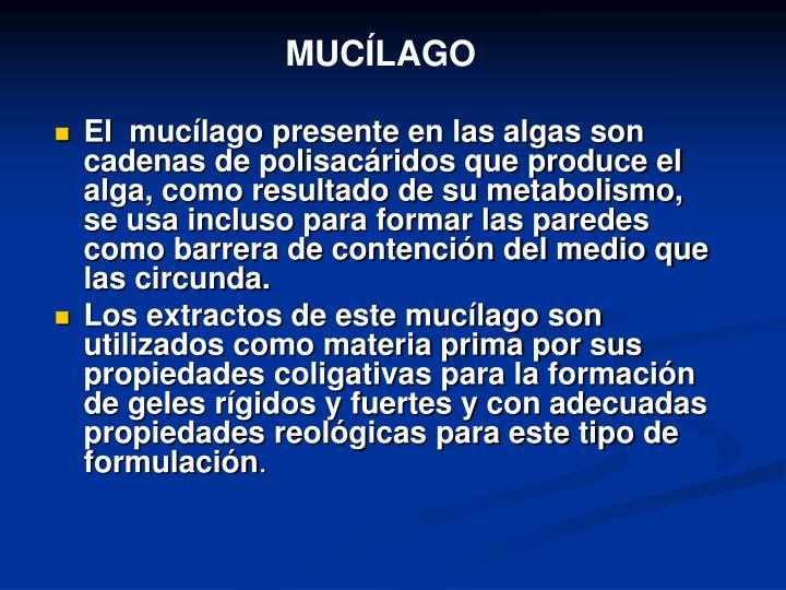 MUCÍLAGO