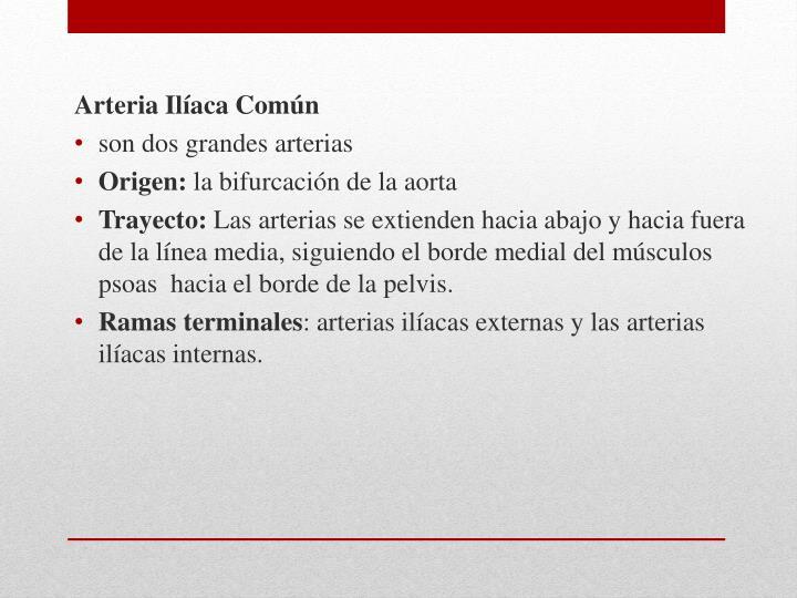Arteria Ilíaca Común