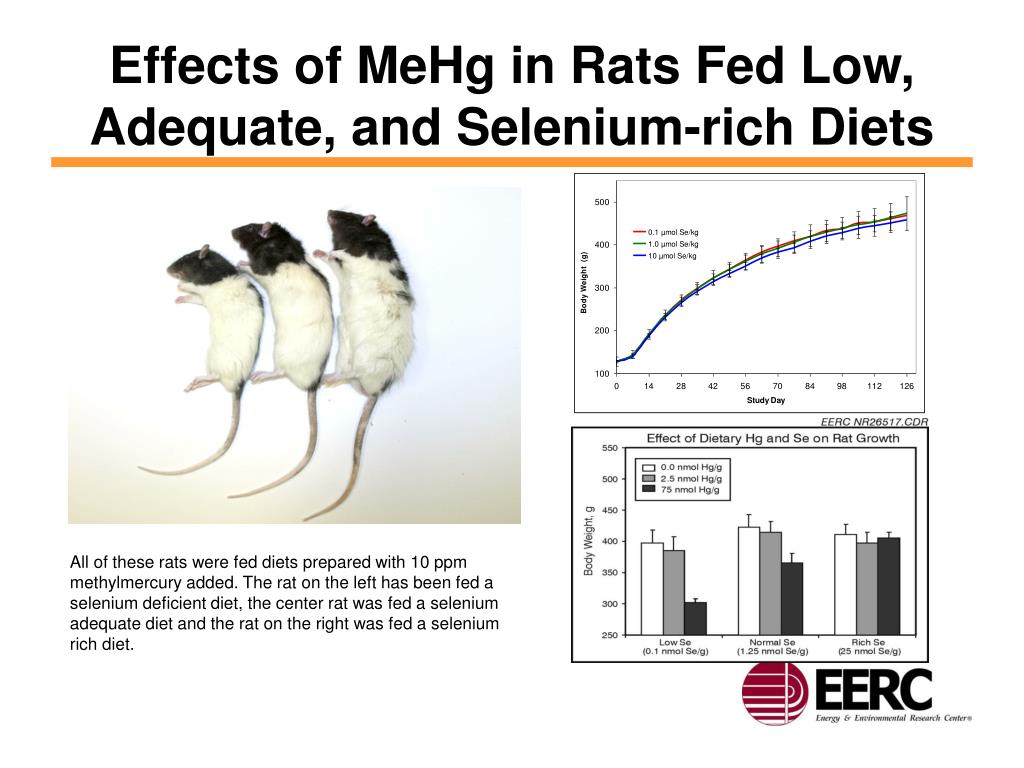 Effects of MeHg in Rats Fed Low, Adequate, and Selenium-rich Diets