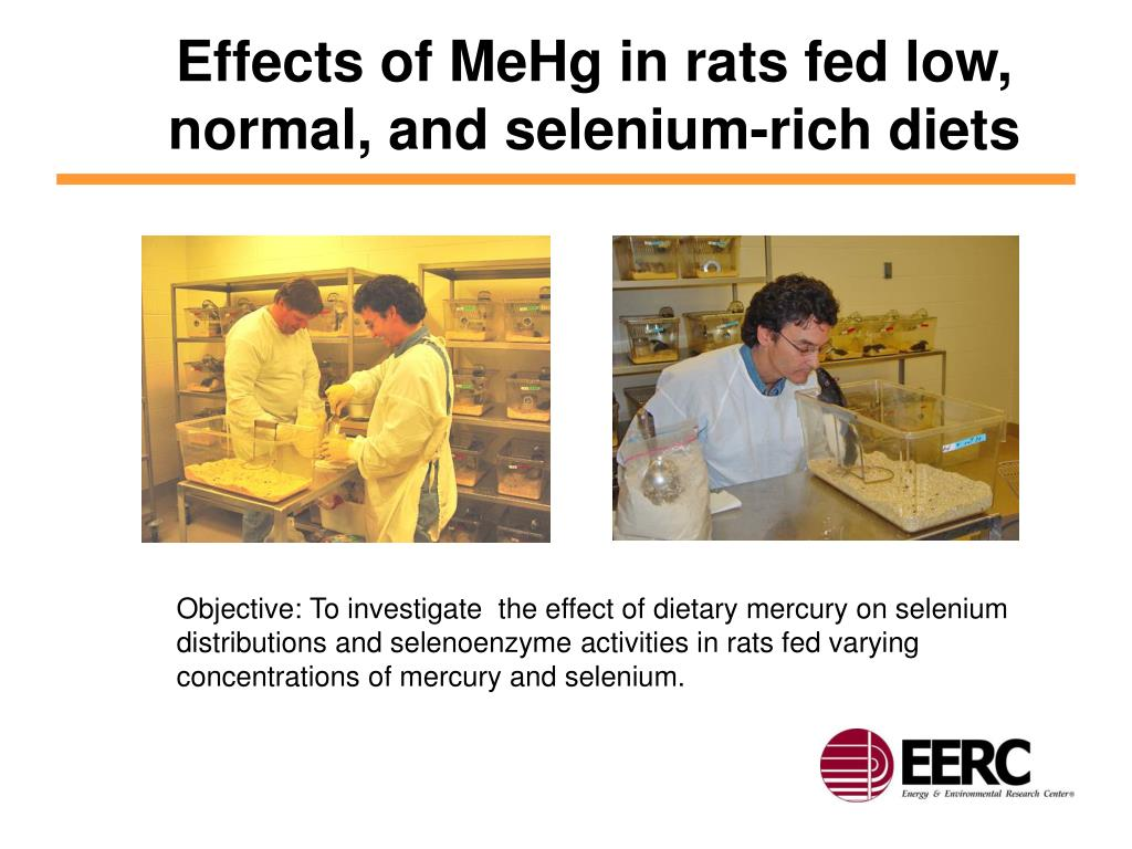Effects of MeHg in rats fed low, normal, and selenium-rich diets