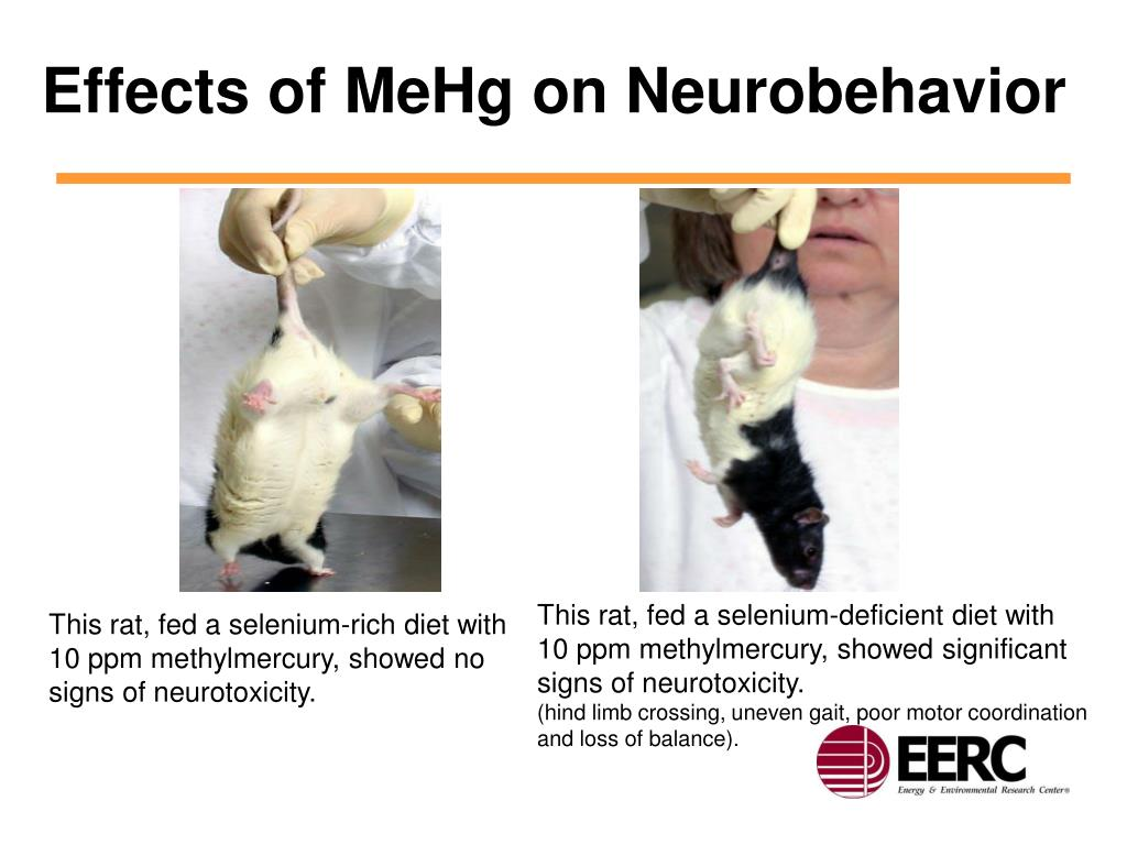 Effects of MeHg on Neurobehavior