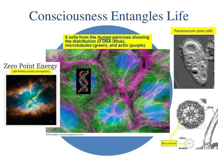 Consciousness Entangles Life