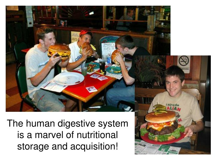 The human digestive system is a marvel of nutritional storage and acquisition!