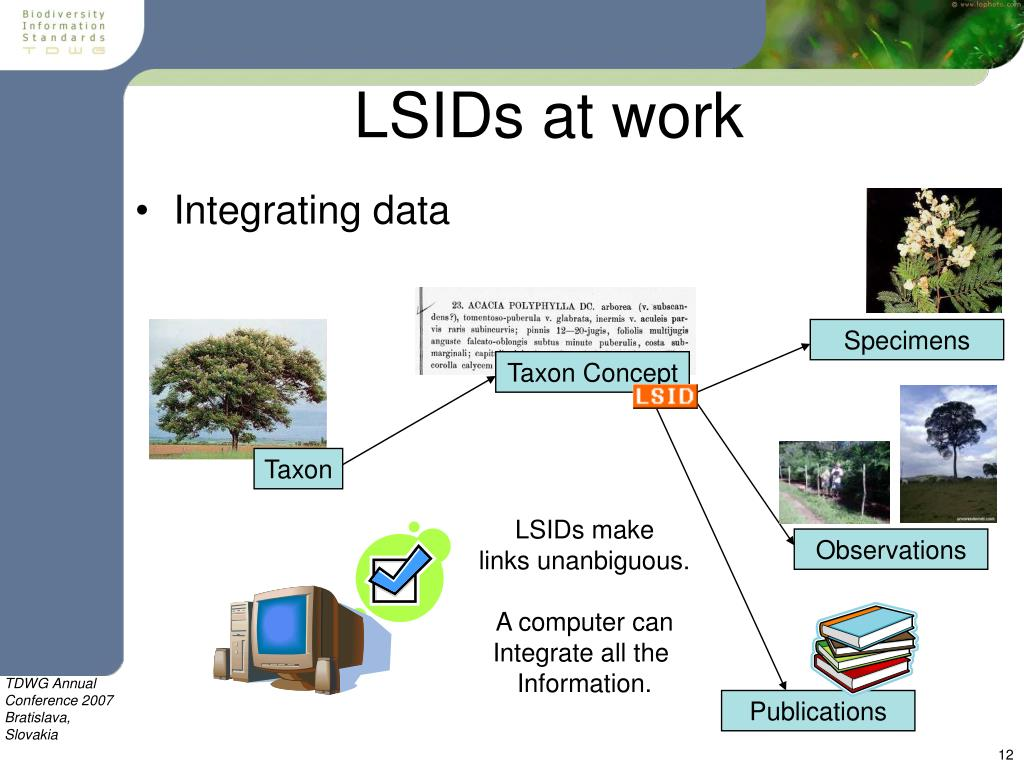 LSIDs at work