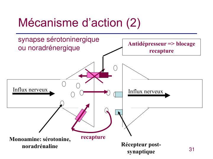 Mécanisme d'action (2)