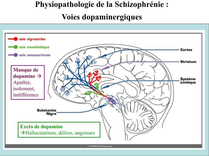 Physiopathologie de la Schizophrénie :