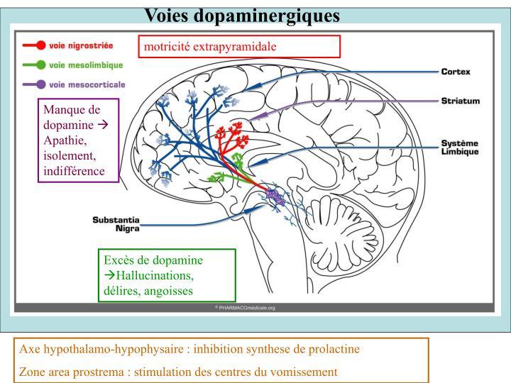 Voies dopaminergiques