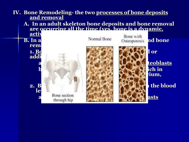 IV.  Bone Remodeling- the two