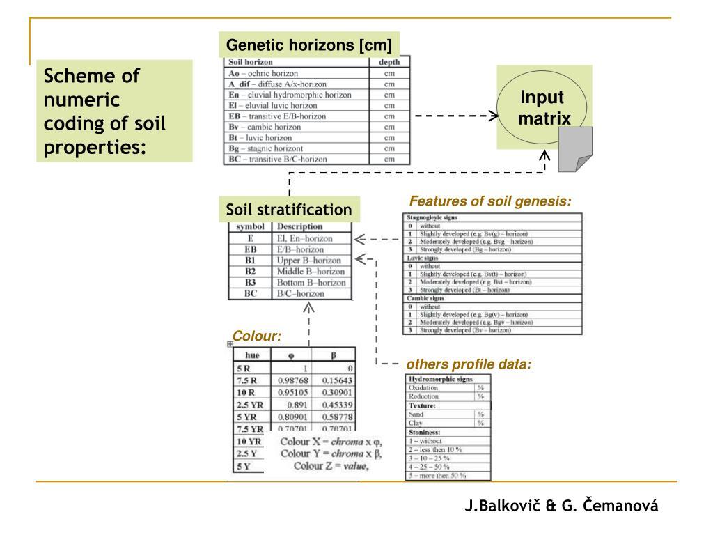 Genetic horizons [cm]