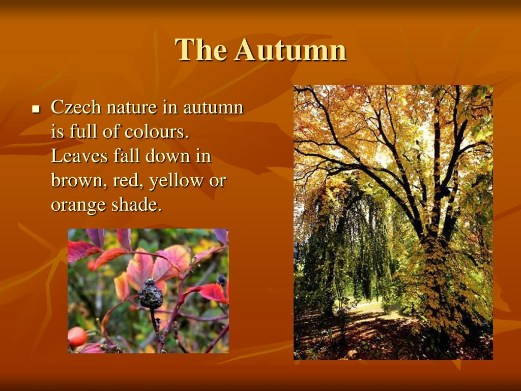 The Autumn