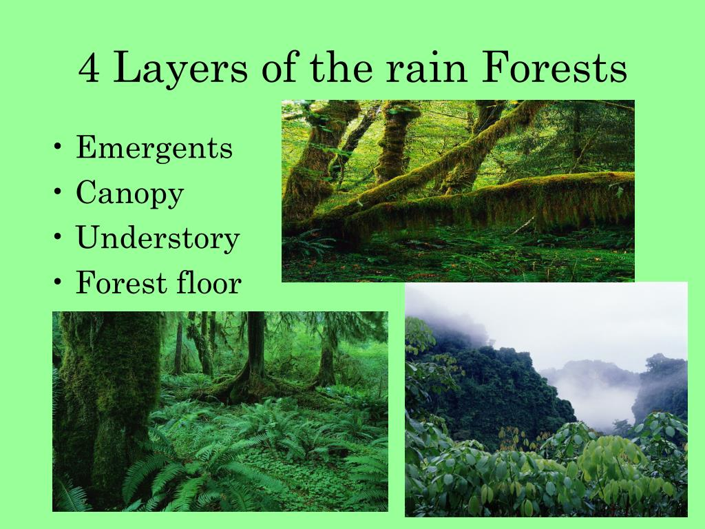 4 Layers of the rain Forests