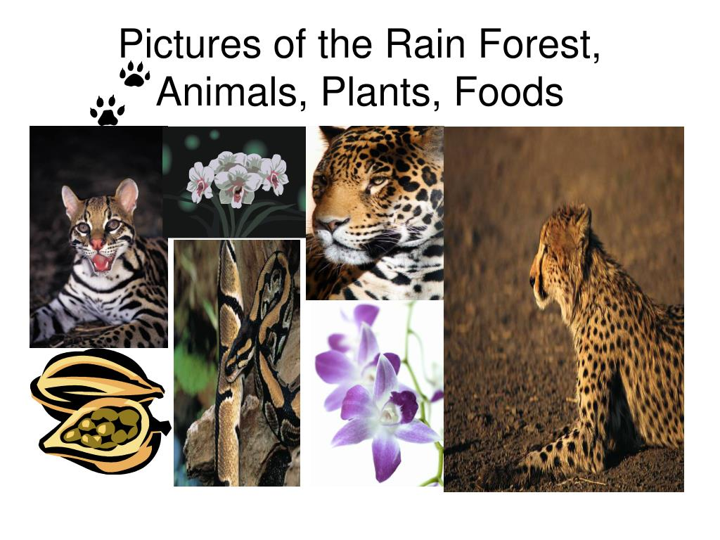 Pictures of the Rain Forest, Animals, Plants, Foods