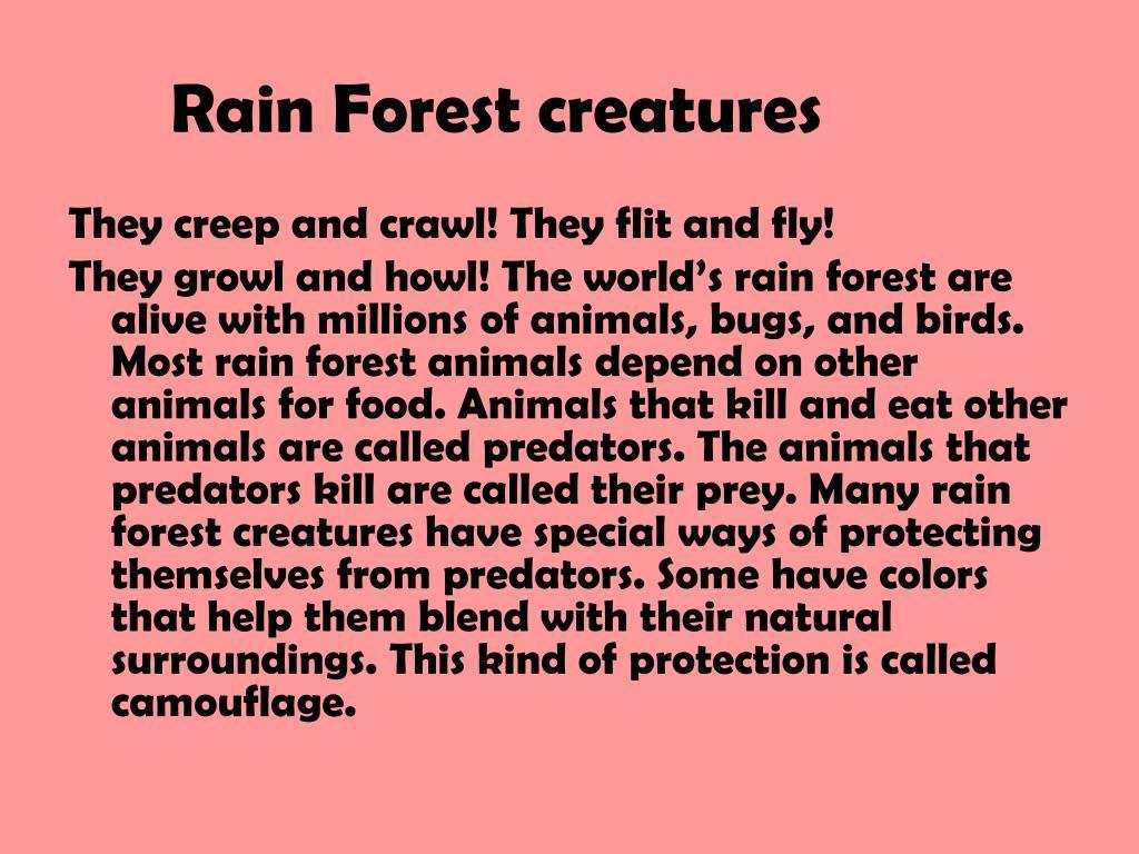Rain Forest creatures