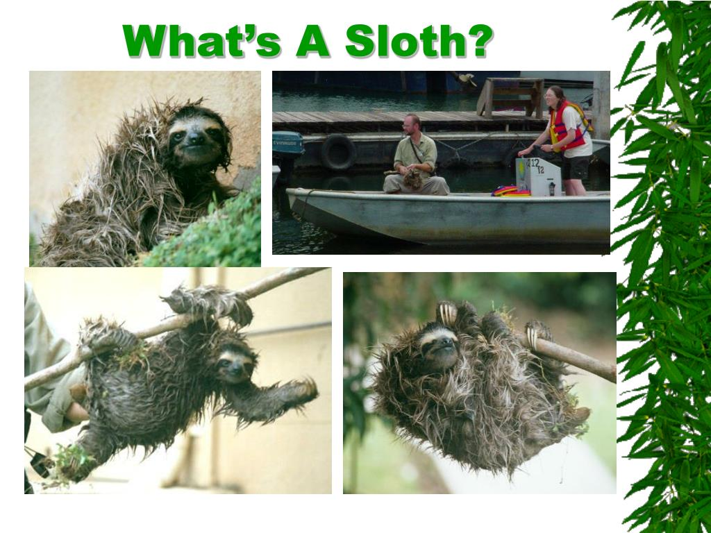 What's A Sloth?