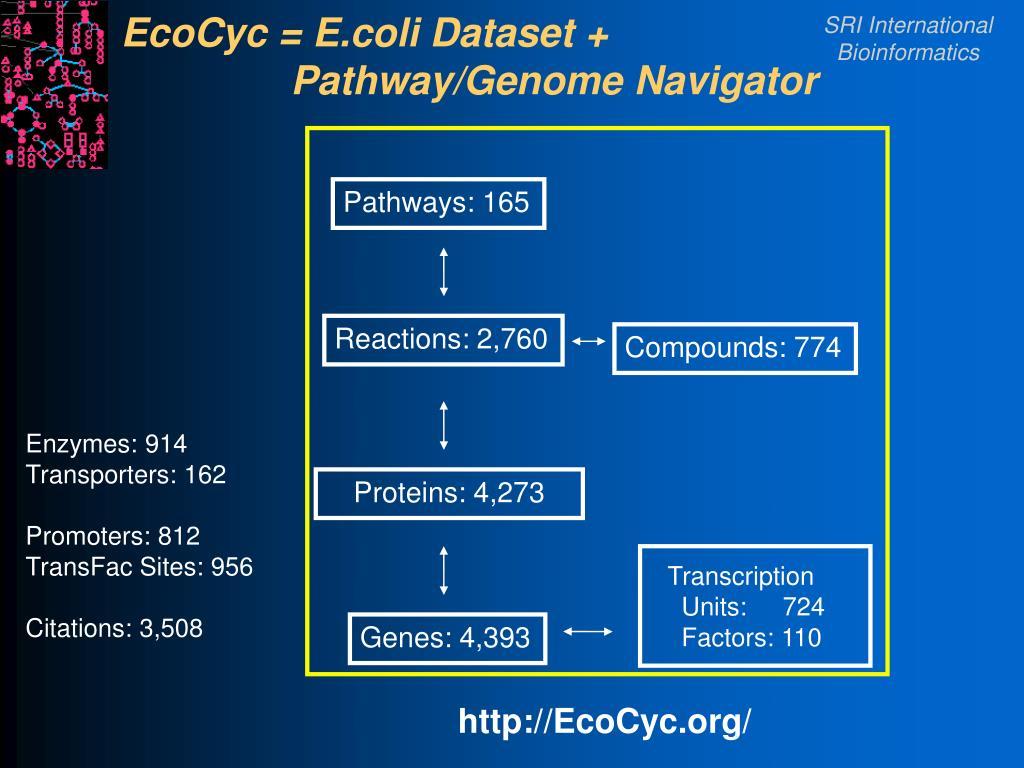 EcoCyc = E.coli Dataset +             Pathway/Genome Navigator