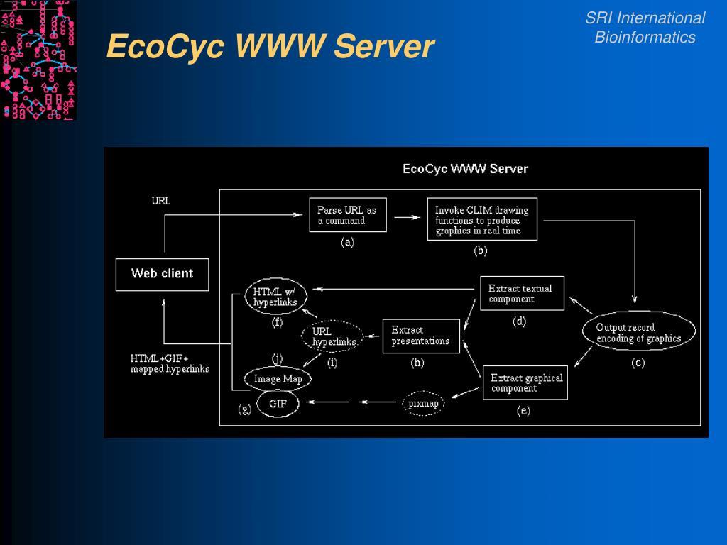 EcoCyc WWW Server