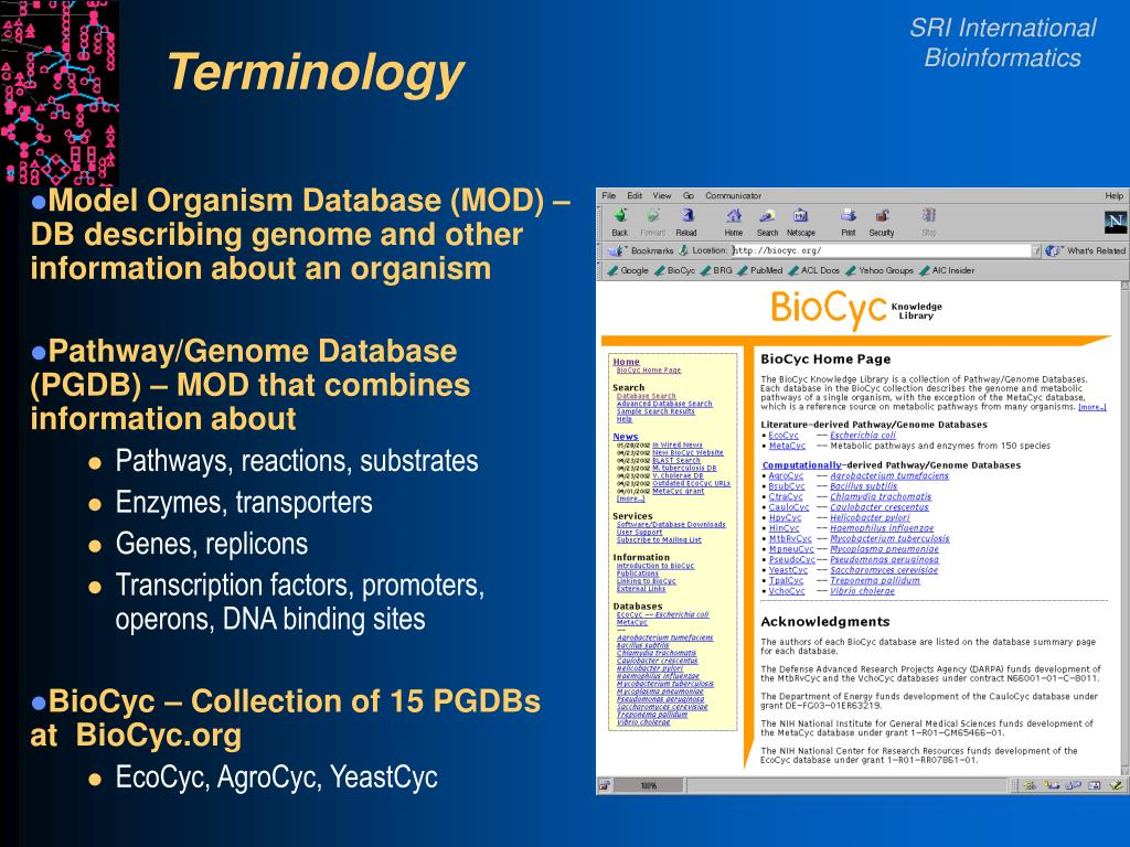 Model Organism Database (MOD) – DB describing genome and other information about an organism