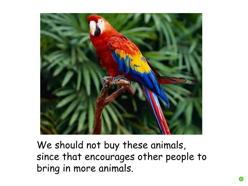 We should not buy these animals, since that encourages other people to bring in more animals.