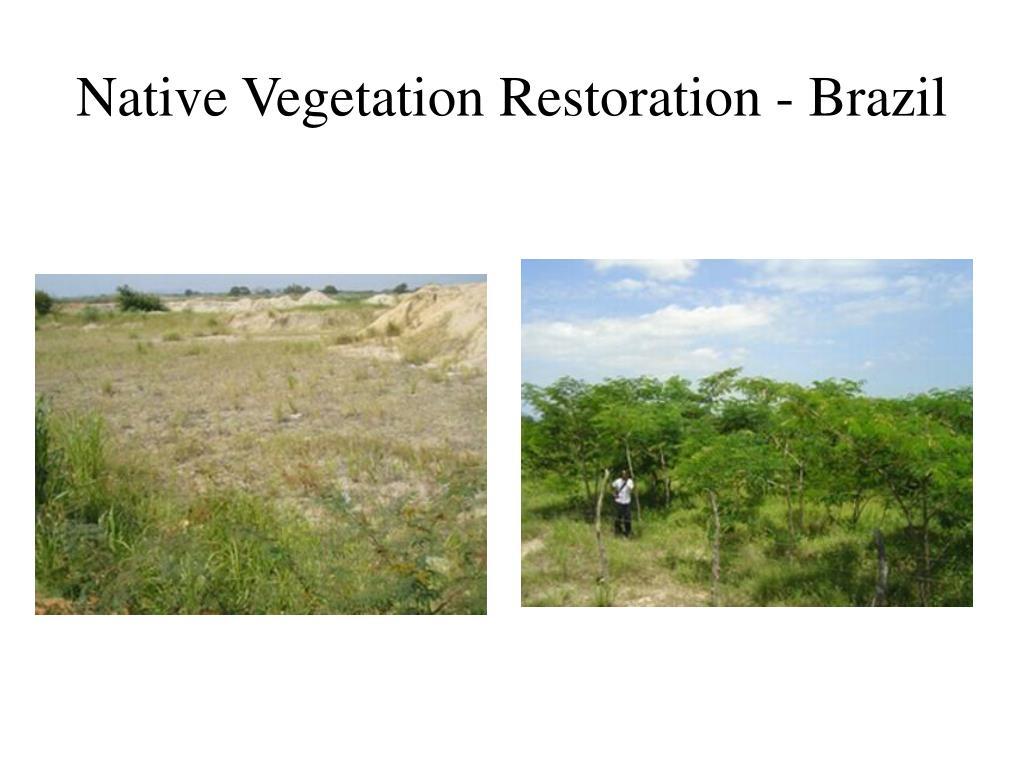 Native Vegetation Restoration - Brazil