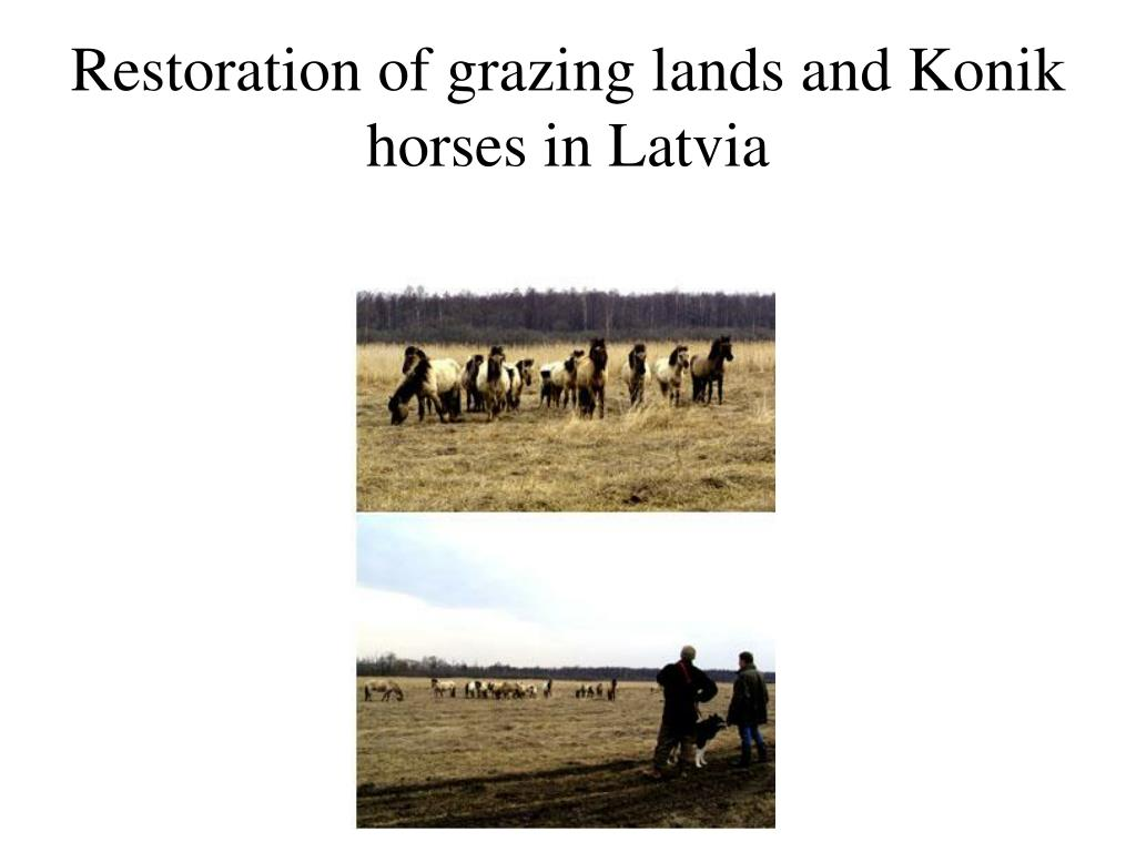 Restoration of grazing lands and Konik horses in Latvia