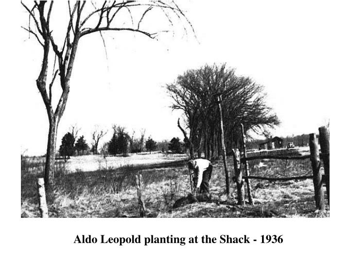 Aldo Leopold planting at the Shack - 1936