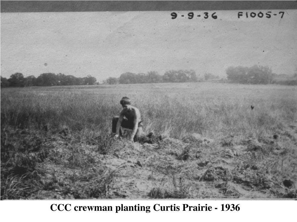 CCC crewman planting Curtis Prairie - 1936
