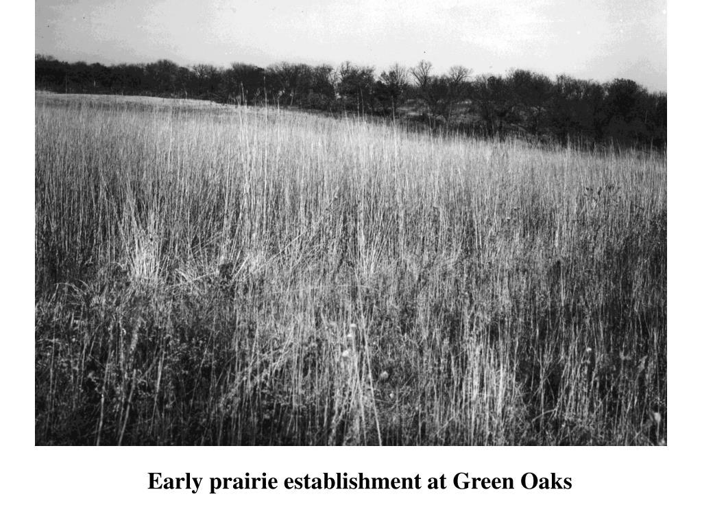 Early prairie establishment at Green Oaks