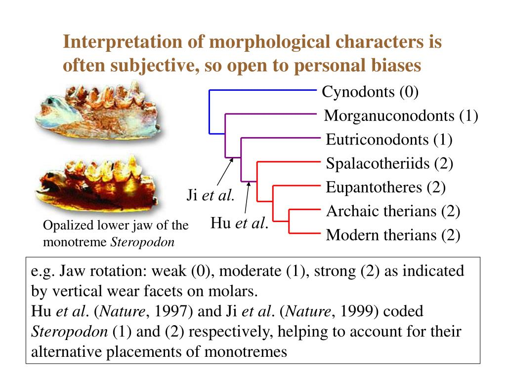 Interpretation of morphological characters is often subjective, so open to personal biases