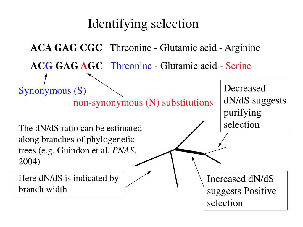 Identifying selection