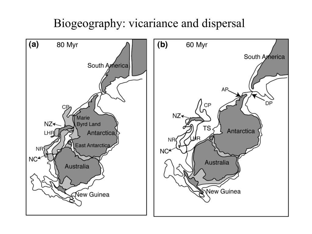 Biogeography: vicariance and dispersal