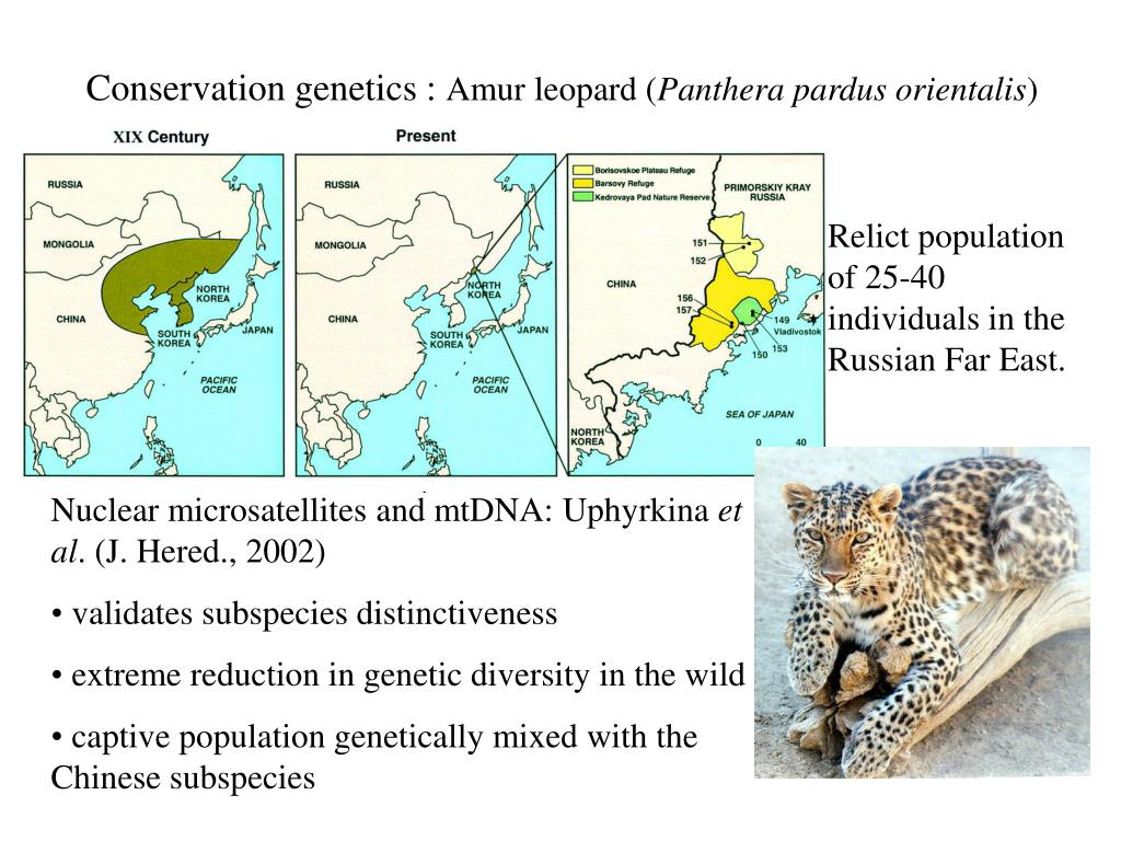 Conservation genetics :