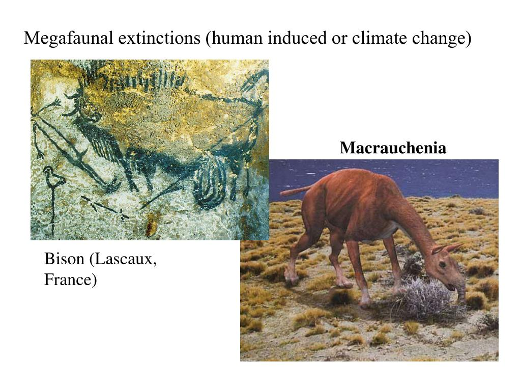 Megafaunal extinctions (human induced or climate change)