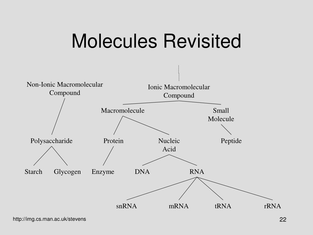 Molecules Revisited