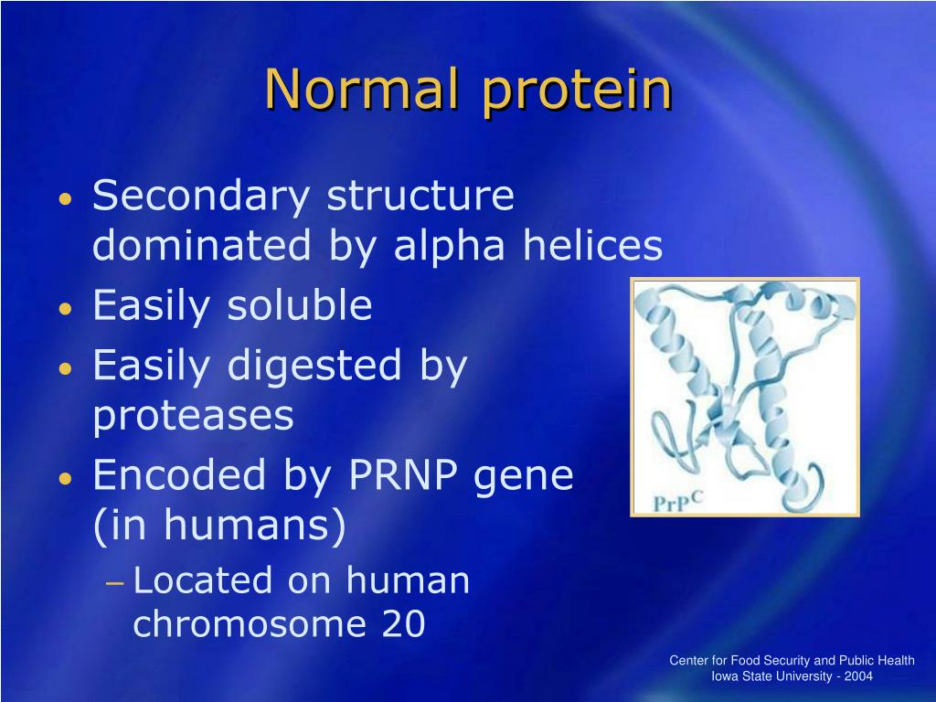 Normal protein