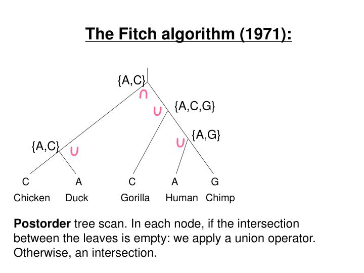 The Fitch algorithm (1971):
