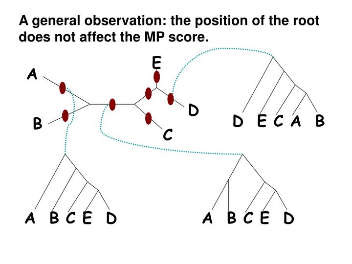 A general observation: the position of the root does not affect the MP score.