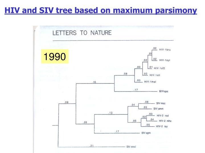 HIV and SIV tree based on maximum parsimony