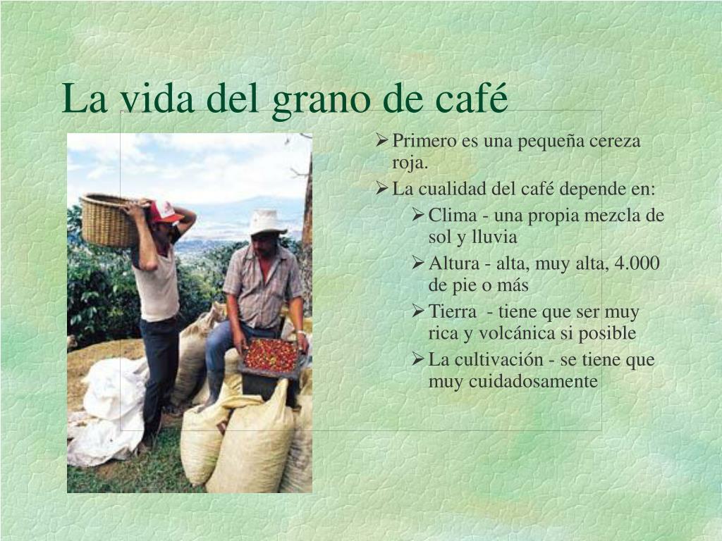 La vida del grano de café