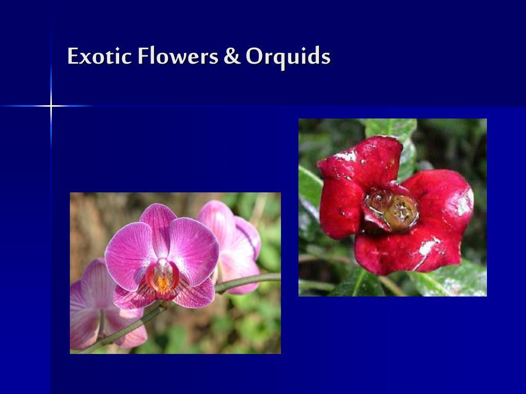 Exotic Flowers & Orquids