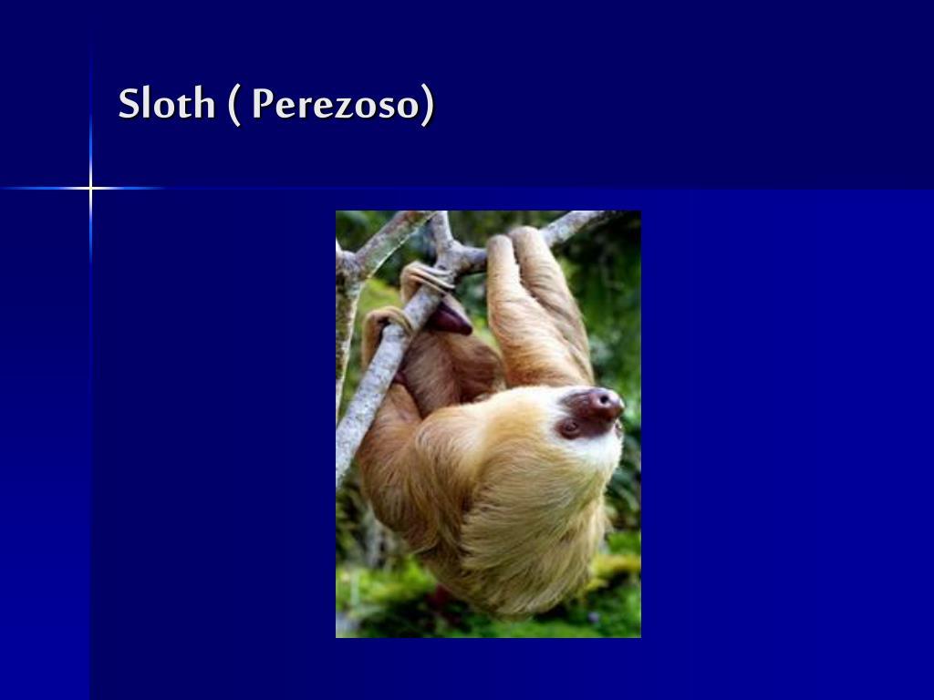 Sloth ( Perezoso)