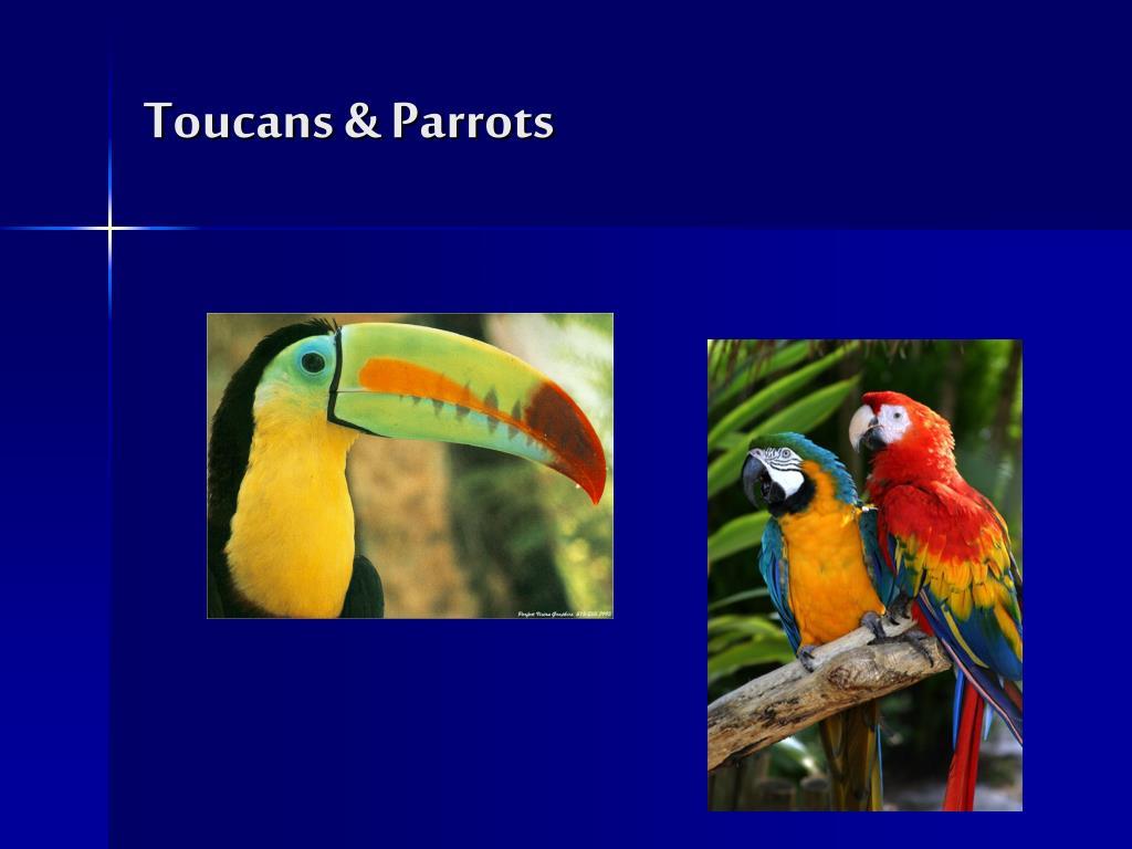 Toucans & Parrots