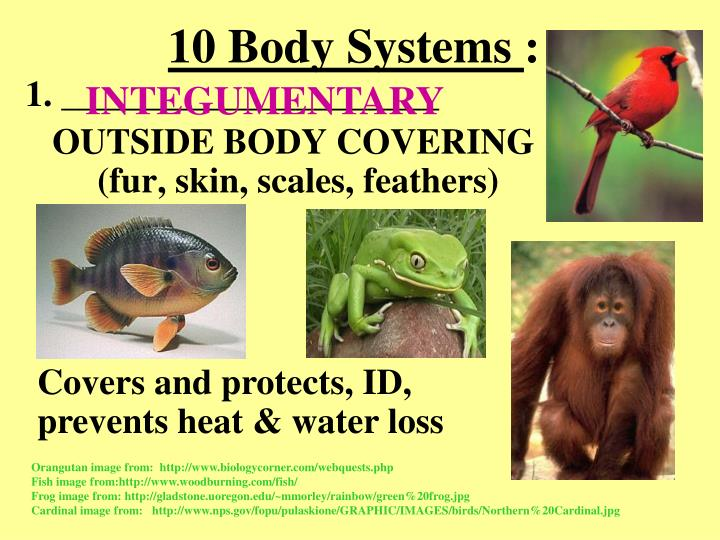 10 Body Systems