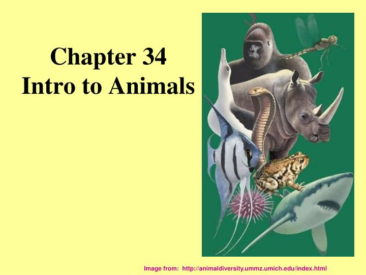 Chapter 34 intro to animals