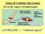 types of coeloms see lums